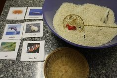 Montessori inspired ocean ideas