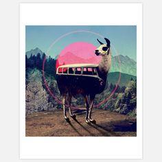 Llama Print 11x14 by Ali Gulec, $25, now featured on Fab.