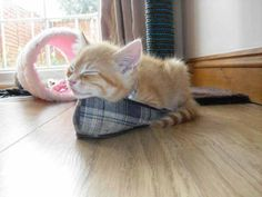 Top 10 cutest sleeping kitties - Oh Man I Love cute pussy