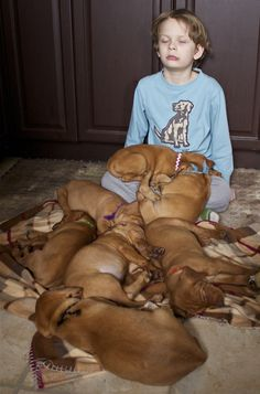 My boy napping with a litter of Vizslas-this photo made it into the local paper!