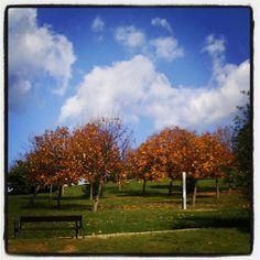 Parque de Los Pericones...