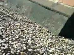 Das Dach bei Georg Naggies. - How To Dry Basil, Herbs, Herb, Medicinal Plants
