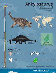 Infografía Anquilosaurio