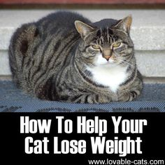 How To Help Your Cat Lose Weight	►►	http://lovable-cats.com/how-to-help-your-cat-lose-weight/?i=p