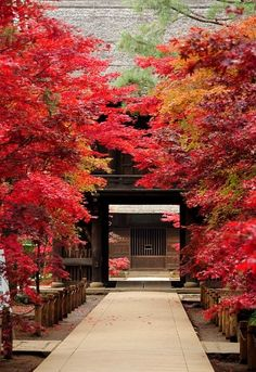 Approach to Heirin-ji temple, Saitama, Japan