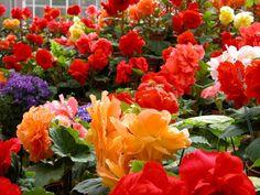 flower+gardens+of+the+world   flower gardens designs on Flower Garden Ideas And Amazing Photos ...