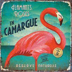 Bruno Pozzo Flamants Roses En Camargue