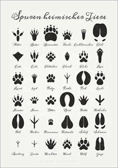 Poster 50 x 70 cm: Spuren heimischer Tiere von Iris Luckhaus - hochwertiger Kunstdruck, neues Kunstposter