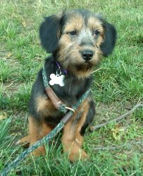 8 Month Olds, Animal Welfare, Terrier Mix, Pet Health, Rescue Dogs, Snuggles, Michigan, Adoption, Puppies