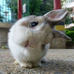 The Cute Rabbit Pets - Page 15 of 28 - Gloria Love Pets Cute Bunny Pictures, Baby Animals Pictures, Cute Animal Pictures, Animals And Pets, Cute Pics, Farm Animals, Bunny Pics, Animals Planet, Cute Little Animals