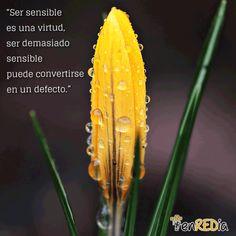 """""""Ser sensible es una virtud, ser demasiado sensible puede convertirse en un defecto."""" #citas #quotes #notas #motivación #positivo #socialmedia #redessociales #marketing #marketingdigital #communitymanager #sm #enredia"""