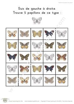 Dans les fiches de travail « Recherche de papillon » l'élève doit trouver tous les papillons identiques à ceux de l'exemple en haut de la page.