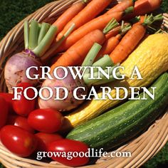 All about various methods of growing your own food including container gardening, square foot gardening, raised beds, vertical gardening, self-watering planters, indoor gardening, hydroponics, permaculture, and other creative ways to grow your own pesticide free vegetables, fruit, and herbs.