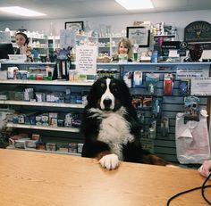 """Fetch me some Adderall. That's a good boy."" http://ift.tt/2gpEtBR"