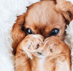 Puppy Shower: A Party To Welcome Your New Family Member - Happy Tiere Baby Animals Pictures, Cute Animal Pictures, Cute Little Animals, Cute Funny Animals, Cute Dogs And Puppies, Doggies, Puppies Puppies, Adorable Puppies, Teacup Puppies