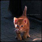 Ginger kitten. #cats #animals