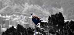 Wellington - Mount Victoria | by aurelie.galtier