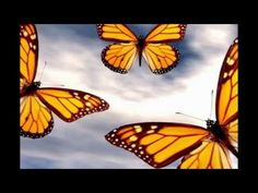 Attract Butterflies to Your Garden EASILY! ~ How to Grow Asclepias Plants - YouTube