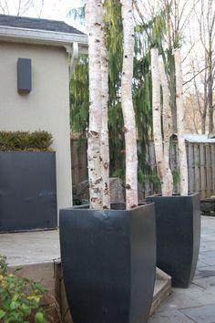 birch logs in planters   Unique Outdoor Christmas Decor