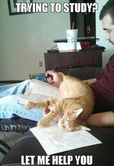 32 Hilarious Struggles Only Cat People Can Understand! - Cody!  All I have to do is crack open the Bible to read  he's right there!  How does he hear / know that!?!?!?!?!  It's not just the can-opener noise that gets 'em running!   (06.20.14)