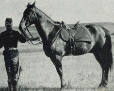 Comanche, survivor of the Battle of Little Big Horn.