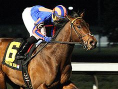 Prohibitive favorite The Great War appears to have bigger battles ahead after winning for fun in his 3-year-old debut Jan. 31, 2015 in the $75,000 96ROCK Stakes under the lights at Turfway Park.