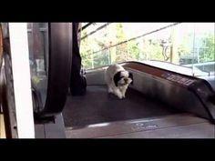 Funny Dog Walking up an Escalator