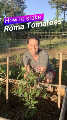 Thanks for this post.How to Stake Roma Tomatoes.If you're growing Roma Tomatoes, they don't require elaborate staking that other tomatoes do. All you need is two vertical supports -- like tomato stakes -- twine, and about 2 minutes, # Roma Tomato Trellis, Garden Trellis, Cucumber Trellis, Potager Garden, Garden Landscaping, Tomato Cage Diy, Bean Trellis, Grape Vine Trellis, Tomato Planter