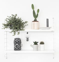 urban-jungle-bloggers-my-plant-shelfie-beeldsteil-blog