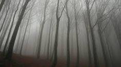 Image result for wallpaper images of gothic forest landscapes