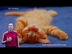Daily Maintenance Program - The Cat Stretch - Somatics Exercises