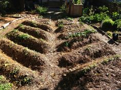 Permaculture Beds for Annuals - raised and mulched