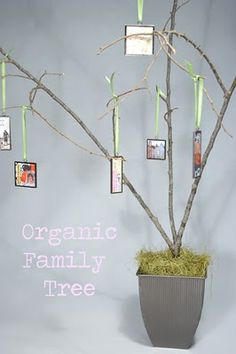organic family tree - great idea to build with family and for the little ones to get to know their extended family.