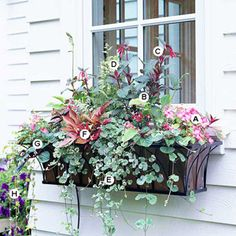 from BHG A. Impatiens Accent Pink Picotee -- 2 B. Hosta Golden Tiara -- 1 C. Jacobs Ladder (Polemonium Brise dAnjou) -- 1 D. Fuchsia Thalia -- 2 E. Ground ivy (Glechoma hederacea Variegata) -- 3 F. Window Box Plants, Window Box Flowers, Flower Boxes, Window Boxes Summer, Window Planters, Container Plants, Container Gardening, Succulent Containers, Gardening Tools