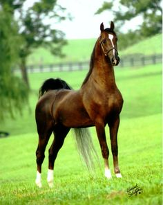 Top Breeder framed within a beautiful expanse of pasture!
