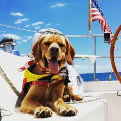 #dogdaysofsummer #westmarine
