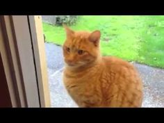 Clever cat rings the doorbell when he wants to go in - http://www.thecutestkitties.com/clever-cat-rings-the-doorbell-when-he-wants-to-go-in/