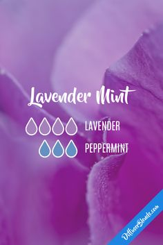 Lavender mint - lavender and peppermint