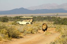 [ ] Hang with Lions on safari