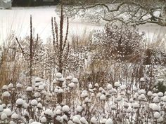 It's best not to trim all your herbaceous plants down, because the old seed heads look great through the winter and provide shelter for beneficial insects and food for wildlife. Winter garden Hermannshof.