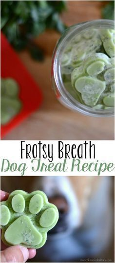Frosty Breath Dog Treats A frozen dog treat with coconut oil and herbs to improve you dog's breath! http://munchkinsandmilitary.com/2017/07/frosty-breath-dog-treats.html?utm_campaign=coschedule&utm_source=pinterest&utm_medium=Alex%20%7C%20Munchkins%20and%20Military&utm_content=Frosty%20Breath%20Dog%20Treats