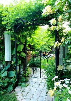 Through the garden gate.   Jenny's garden. July, 2012