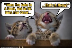 Kitties have a finely honed sense of silliness.
