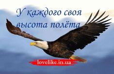 Если орел возьмет с собой вполетголубя, последнему придется лететь не на привычной ему высоте и не со свойственной ему скоростью...