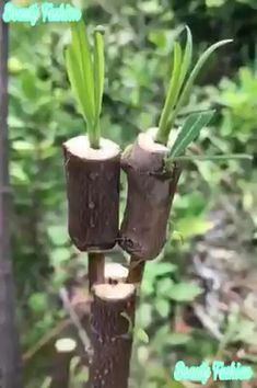 Amazing plants hack with amazing technique awesome idea for plants growing Follo. Amazing plants h Fruit Garden, Edible Garden, Herb Garden, Lawn And Garden, Vegetable Garden, Garden Pots, Garden Crafts, Garden Projects, Grafting Plants