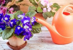 Geranium Flower, Watering Can, Geraniums, Canning, Flowers, Blog, Environment, Green, Home Canning