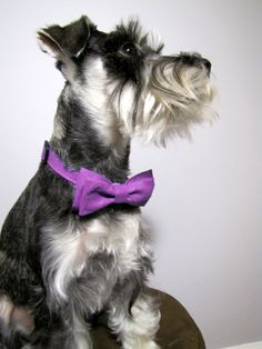 Purple Sparkles Bow Tie Adjustable Collar by playfulpup on Etsy, $16.00