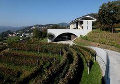 Fattoria Moncucchetto #wine #architecture #switzerland #tessin