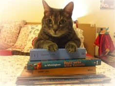 You gave me BOOKS for my birthday, and I'm supposed to do what with them? Does that include shredding?