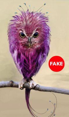 Don't call me an owl! I'm an Easter egg born in an owl body. Beautiful Owl, Animals Beautiful, Cute Animals, Funny Animals, Unique Animals, Baby Animals, Exotic Birds, Colorful Birds, Green Birds